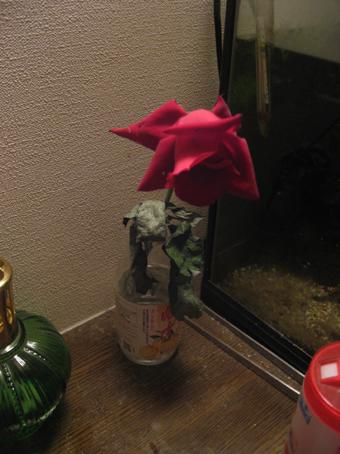 画室にやって来た薔薇