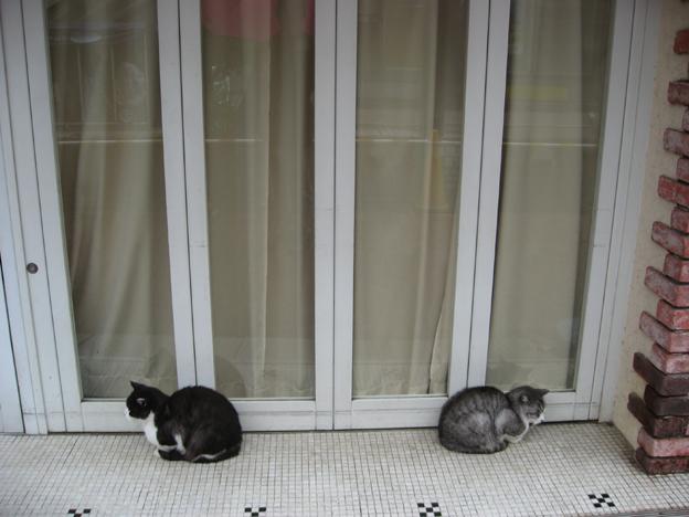 自由が丘の雨宿り猫2