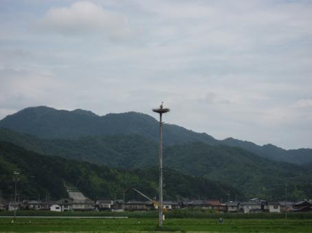 コウノトリ母子のいる巣塔